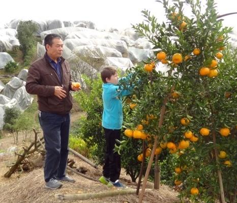 Isak og Sams pappa fyller lommene med mandariner.