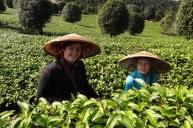 Isak og mamma plukker te, noe forstyrret av alle biene som svermet rundt