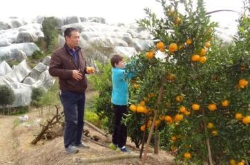 Deilige appelsiner i Sør-Kina