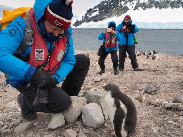 Turister i nærkontakt med pingviner