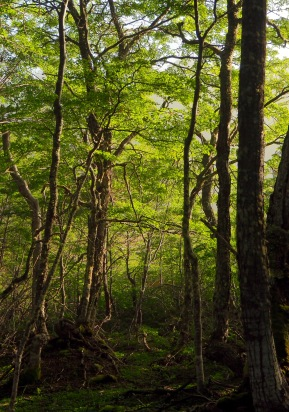 Grønne skoger