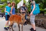 Artig med de tamme sika-hjortene